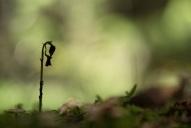 Clair de forêt (1)