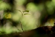 Clair de forêt (2)