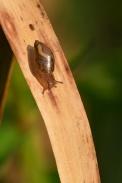 Herpétofaune-Gastéropode