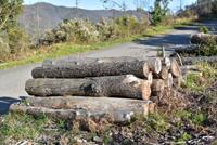 Désastre écologique (13)
