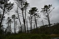 Désastre écologique (4)